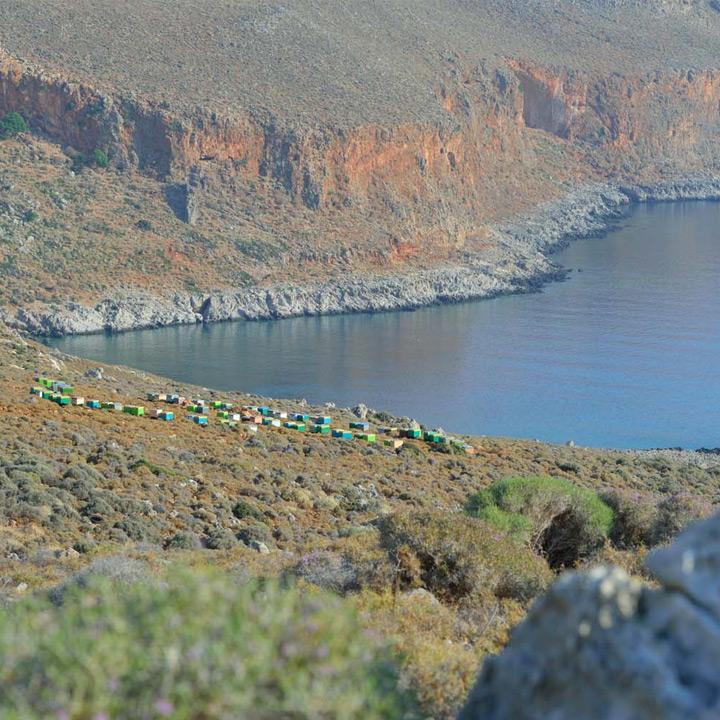 Bijenkorven aan de kustlijn van Kreta