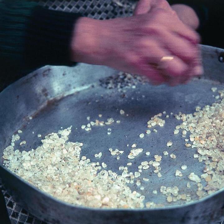 Masticha in gedroogde vorm wordt gesorteerd