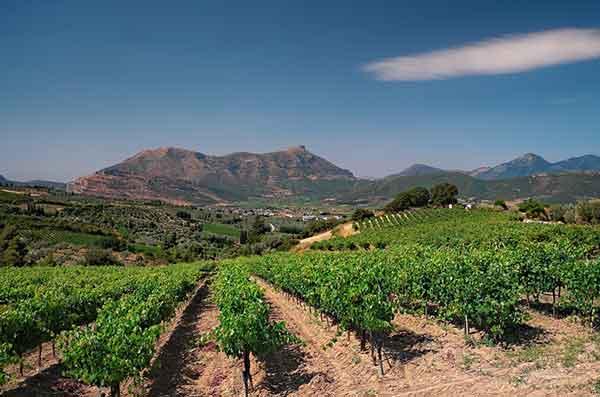 Wijngaard in Griekenland