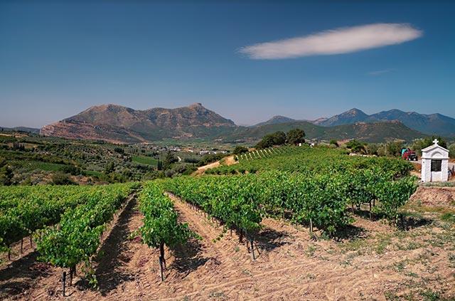 Griekse wijn kopen van inheemse druivenrassen uit Griekenland